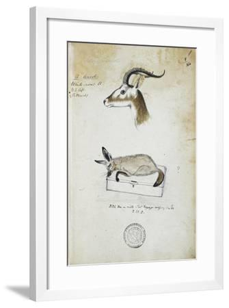 Drawing of an Antelope and a Fox-John Hanning Speke-Framed Giclee Print