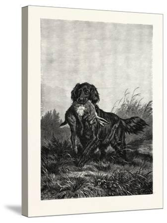 A Retriever, after Deiker, a Type of Gun Dog That Retrieves Game for a Hunter--Stretched Canvas Print
