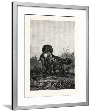 A Retriever, after Deiker, a Type of Gun Dog That Retrieves Game for a Hunter--Framed Giclee Print