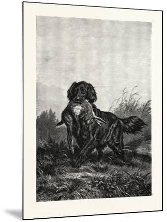 A Retriever, after Deiker, a Type of Gun Dog That Retrieves Game for a Hunter--Mounted Giclee Print