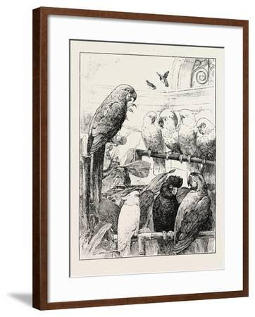 Mr. Stacy Marks's a Select Committee Is Unintentionally a Satire--Framed Giclee Print