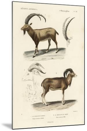 Antique Antelope and Ram Study-N^ Remond-Mounted Art Print