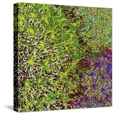 Profusion II-James Burghardt-Stretched Canvas Print