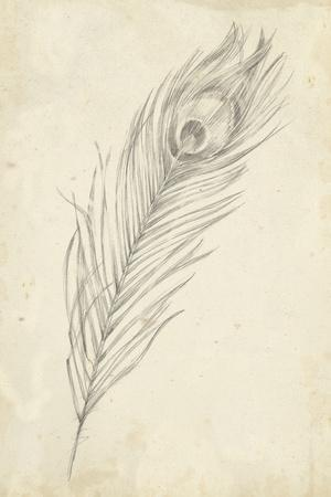 Peacock Feather Sketch II-Ethan Harper-Stretched Canvas Print