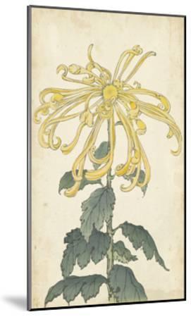 Elegant Chrysanthemums II--Mounted Art Print
