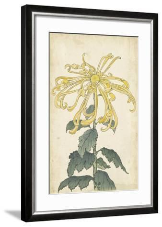 Elegant Chrysanthemums II--Framed Art Print