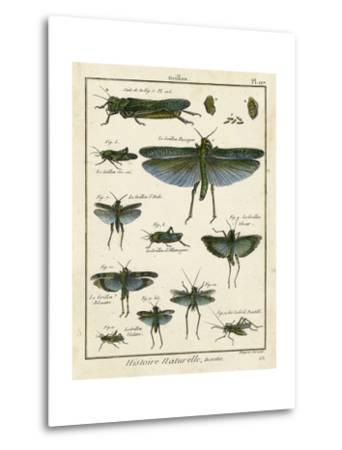 Histoire Naturelle Insects II-Diderot-Metal Print