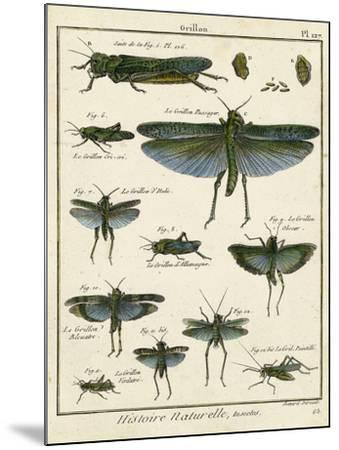 Histoire Naturelle Insects II-Diderot-Mounted Art Print