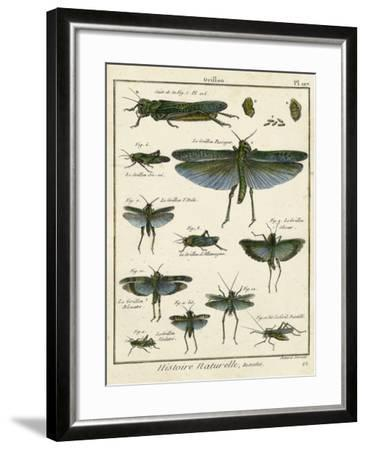 Histoire Naturelle Insects II-Diderot-Framed Art Print