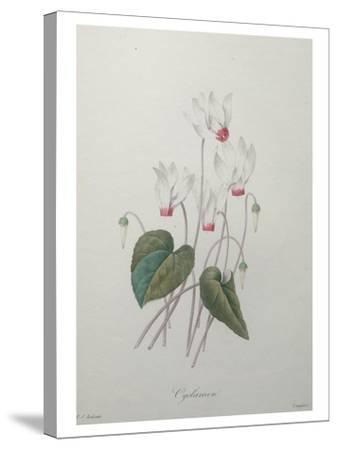 Cyclamen-Pierre-Joseph Redoute-Stretched Canvas Print
