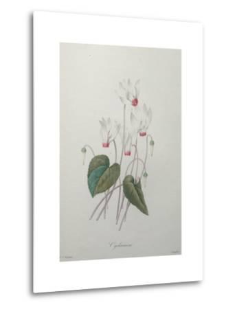 Cyclamen-Pierre-Joseph Redoute-Metal Print