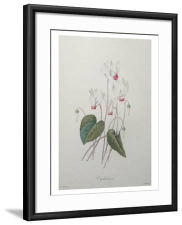 Cyclamen-Pierre-Joseph Redoute-Framed Art Print