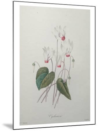 Cyclamen-Pierre-Joseph Redoute-Mounted Art Print