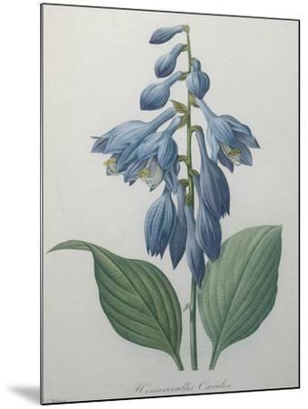 Blue Day Lillies-Pierre-Joseph Redoute-Mounted Art Print