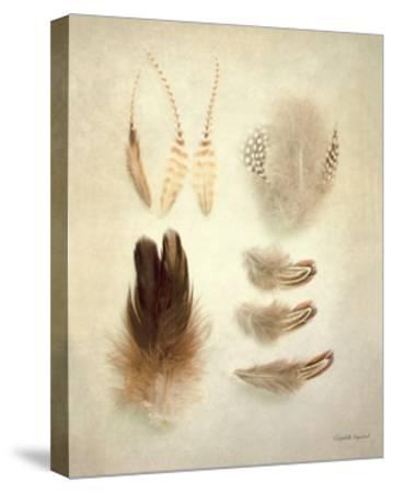Feathers II-Elizabeth Urquhart-Stretched Canvas Print