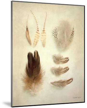 Feathers II-Elizabeth Urquhart-Mounted Art Print