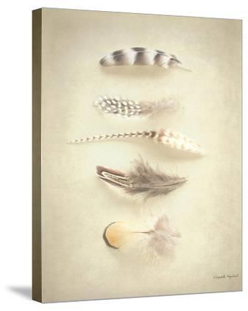 Feathers III-Elizabeth Urquhart-Stretched Canvas Print