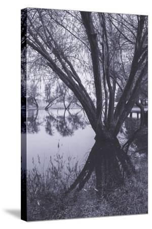 Tree and Pond Reflections at Marin County Pond California-Vincent James-Stretched Canvas Print
