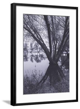 Tree and Pond Reflections at Marin County Pond California-Vincent James-Framed Photographic Print