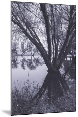 Tree and Pond Reflections at Marin County Pond California-Vincent James-Mounted Photographic Print