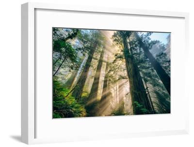 Divine Forest Light Coast Redwoods Del Norte California-Vincent James-Framed Photographic Print