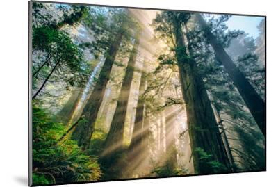 Divine Forest Light Coast Redwoods Del Norte California-Vincent James-Mounted Photographic Print