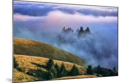 Magical Land of Fog and Light, Mount Tamalpais State Park, California-Vincent James-Mounted Photographic Print
