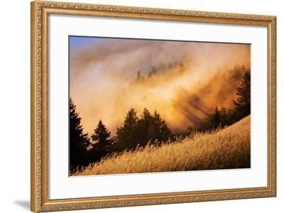 Fog and Light Collision Mount Tamalpais, Marin County, San Francisco-Vincent James-Framed Photographic Print