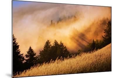 Fog and Light Collision Mount Tamalpais, Marin County, San Francisco-Vincent James-Mounted Photographic Print