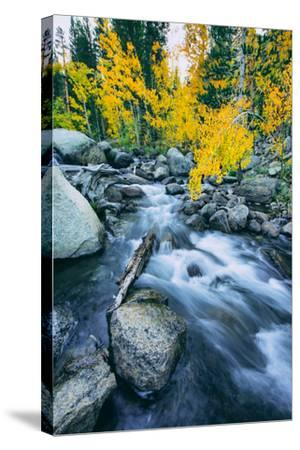 Autumn at Bishop Creek Canyon, Eastern Sierra Mountains, California-Vincent James-Stretched Canvas Print