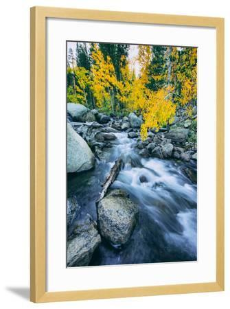Autumn at Bishop Creek Canyon, Eastern Sierra Mountains, California-Vincent James-Framed Photographic Print