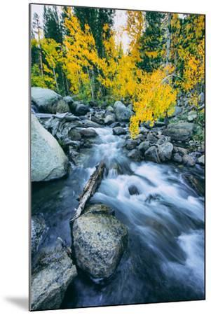 Autumn at Bishop Creek Canyon, Eastern Sierra Mountains, California-Vincent James-Mounted Photographic Print