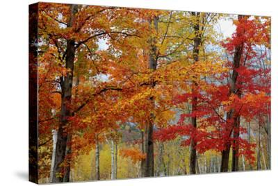 Autumn Foliage, Lincoln New Hampshire, New England-Vincent James-Stretched Canvas Print