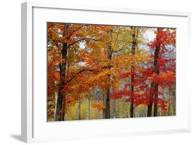 Autumn Foliage, Lincoln New Hampshire, New England-Vincent James-Framed Photographic Print