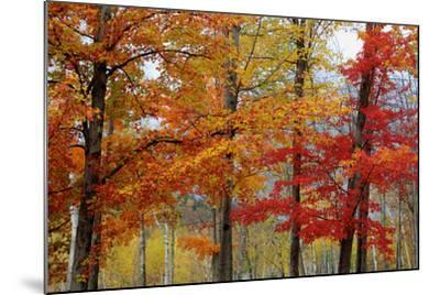 Autumn Foliage, Lincoln New Hampshire, New England-Vincent James-Mounted Photographic Print