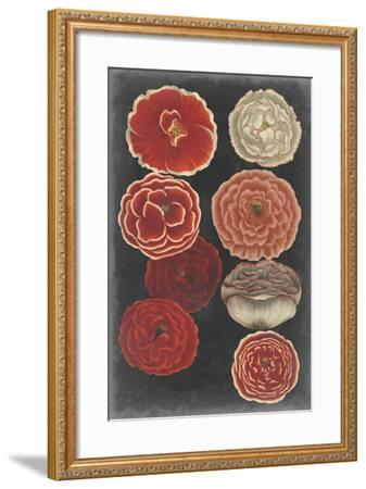 Midnight Poppies-Vision Studio-Framed Art Print