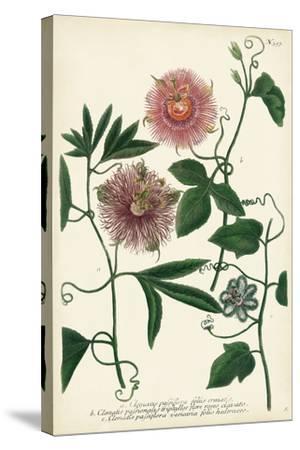 Antique Passion Flower I-Weinmann-Stretched Canvas Print