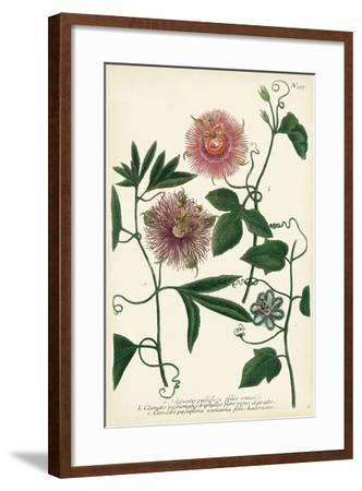 Antique Passion Flower I-Weinmann-Framed Art Print