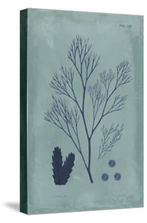 Indigo and Azure Seaweed V-Vision Studio-Stretched Canvas Print