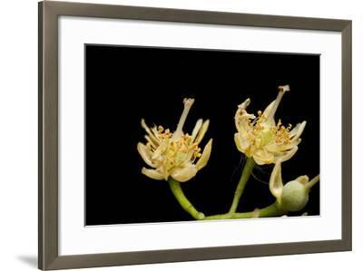 Seed Pods, Post Flowering-Joel Sartore-Framed Photographic Print