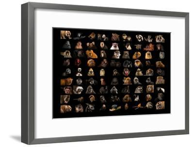 Composite of 90 Different Species of Primates-Joel Sartore-Framed Photographic Print