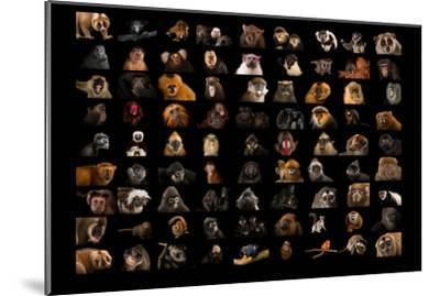 Composite of 90 Different Species of Primates-Joel Sartore-Mounted Photographic Print