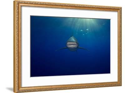 An Oceanic Whitetip Shark Swimming in the Open Ocean-Jim Abernethy-Framed Photographic Print