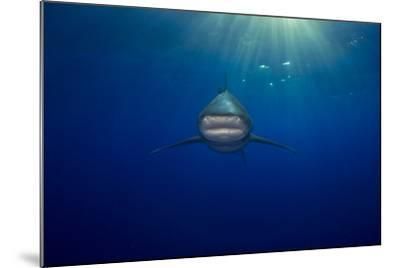 An Oceanic Whitetip Shark Swimming in the Open Ocean-Jim Abernethy-Mounted Photographic Print