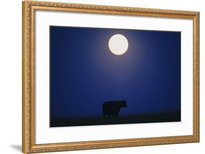 Silhouette of a Cow Against the Night Sky Below the Moon-Michael Forsberg-Framed Photographic Print