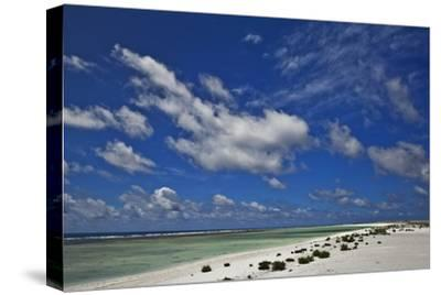 New Vegetation on Deserted Starbuck Island in the Southern Line Islands-Mauricio Handler-Stretched Canvas Print