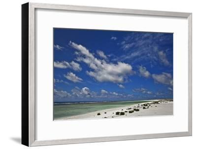 New Vegetation on Deserted Starbuck Island in the Southern Line Islands-Mauricio Handler-Framed Photographic Print