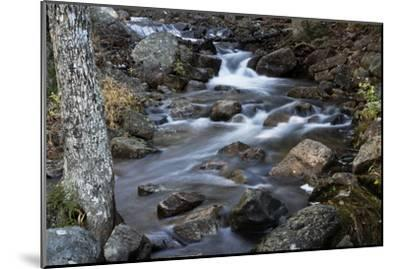 A Flowing River in Acadia National Park, Maine-Mauricio Handler-Mounted Photographic Print