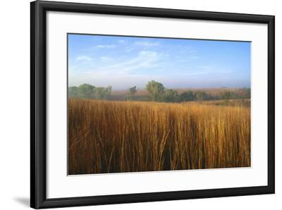 Tall Bluestem Grass Covers the Countryside-Michael Forsberg-Framed Photographic Print