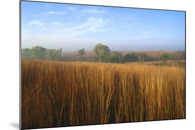 Tall Bluestem Grass Covers the Countryside-Michael Forsberg-Mounted Photographic Print